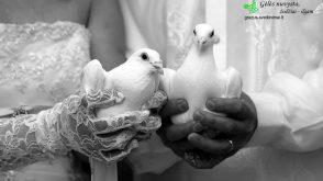 Vestuvių džiaugsmas