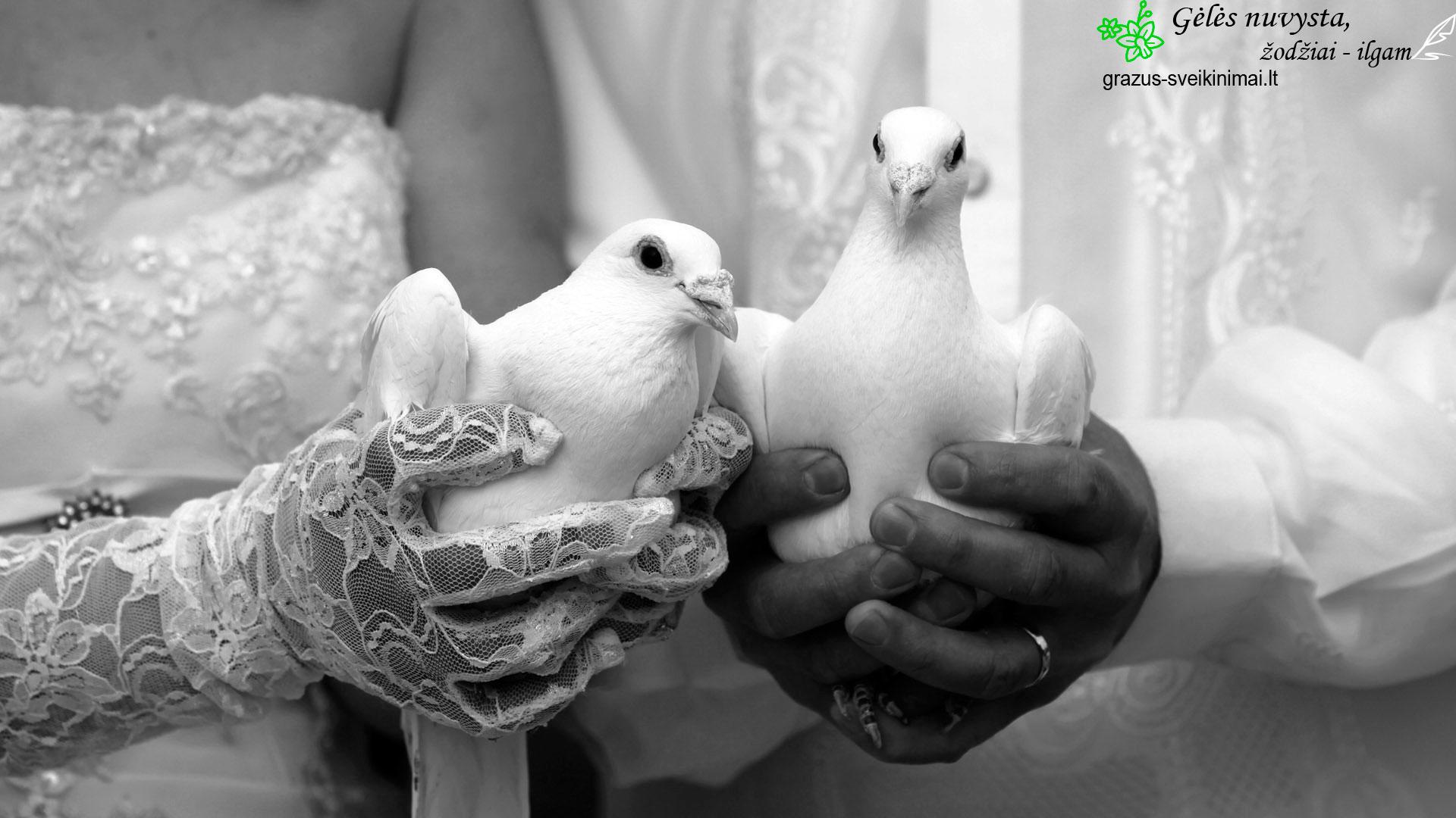 vestuviu-pauksciai