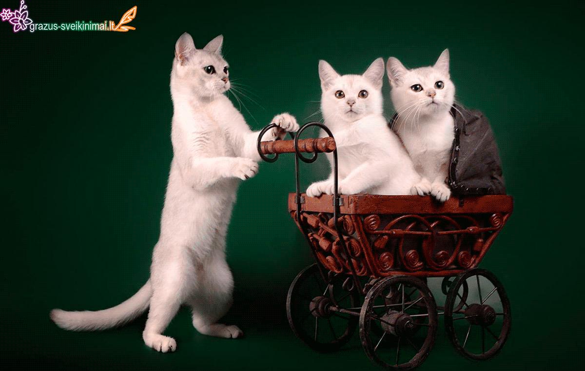 Su kačių diena
