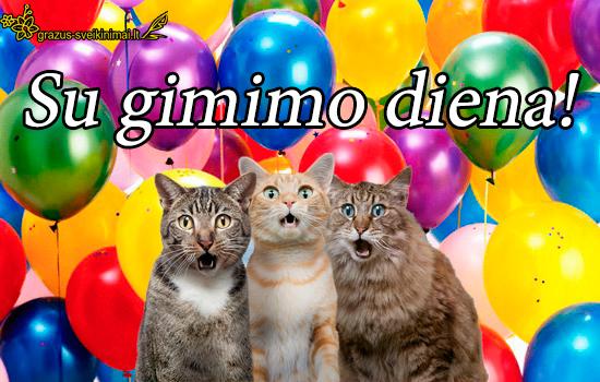 Su gimimo diena nuo katinukų