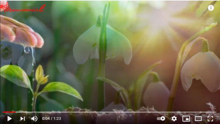 Prasmingų Velykų video